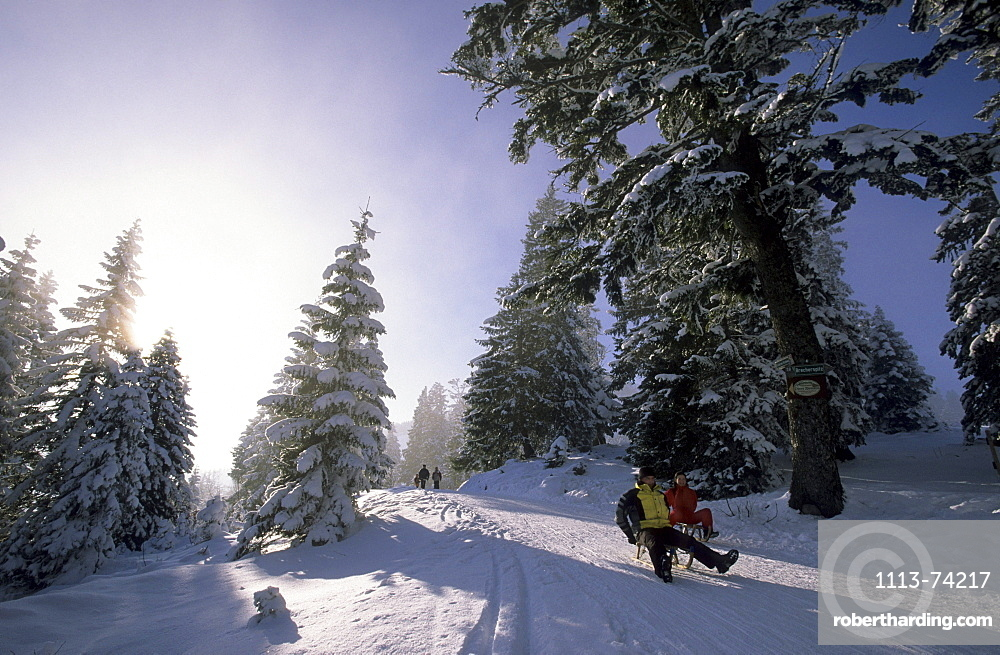 sledging at Firstalm, Bavarian Alps, Upper Bavaria, Bavaria, Germany