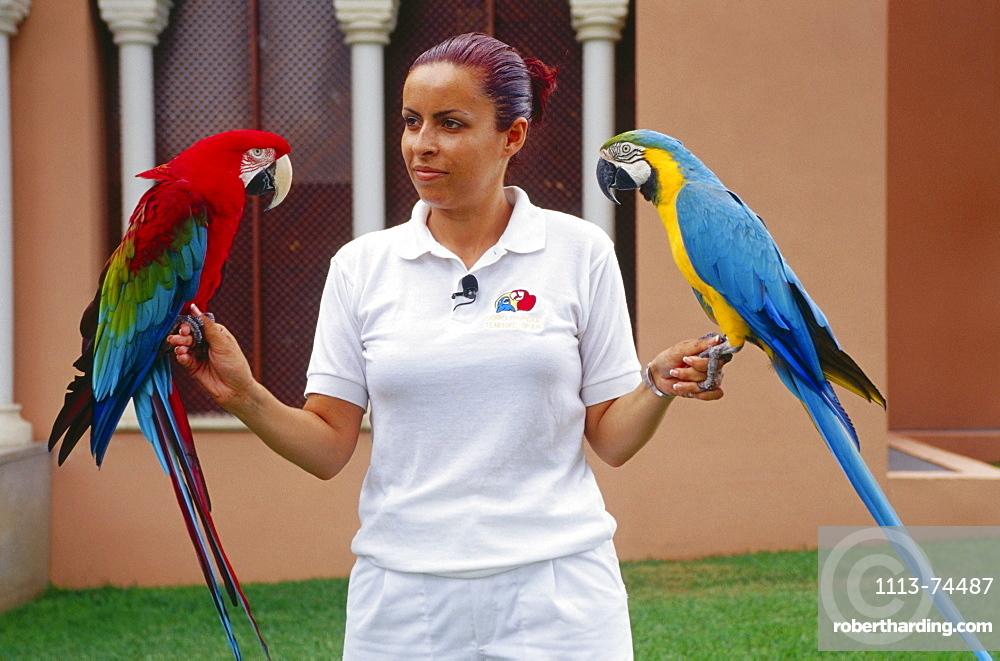 Parrot show, Loro Parque, Puerto de la Cruz, Tenerife, Canary Islands, Spain
