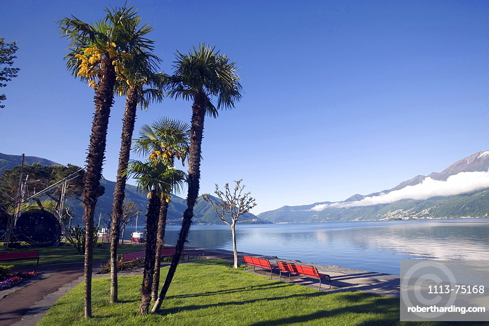Palms growing at lakeshore of Lake Maggiore, Ascona, Ticino, Switzerland