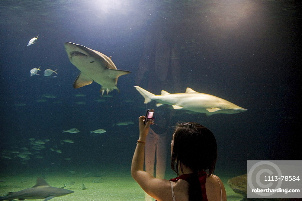 underwater tunnel, sharks, L'Oceanografic, Valencia, Spain