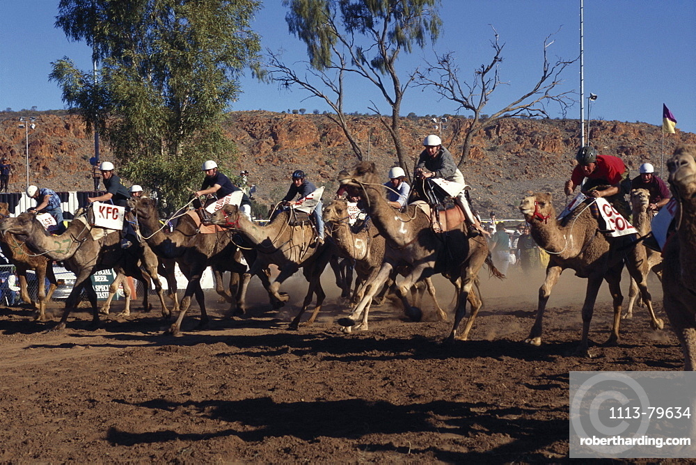 Camel racing, Camel Cup in Alice Springs, Northern Territory, Australia