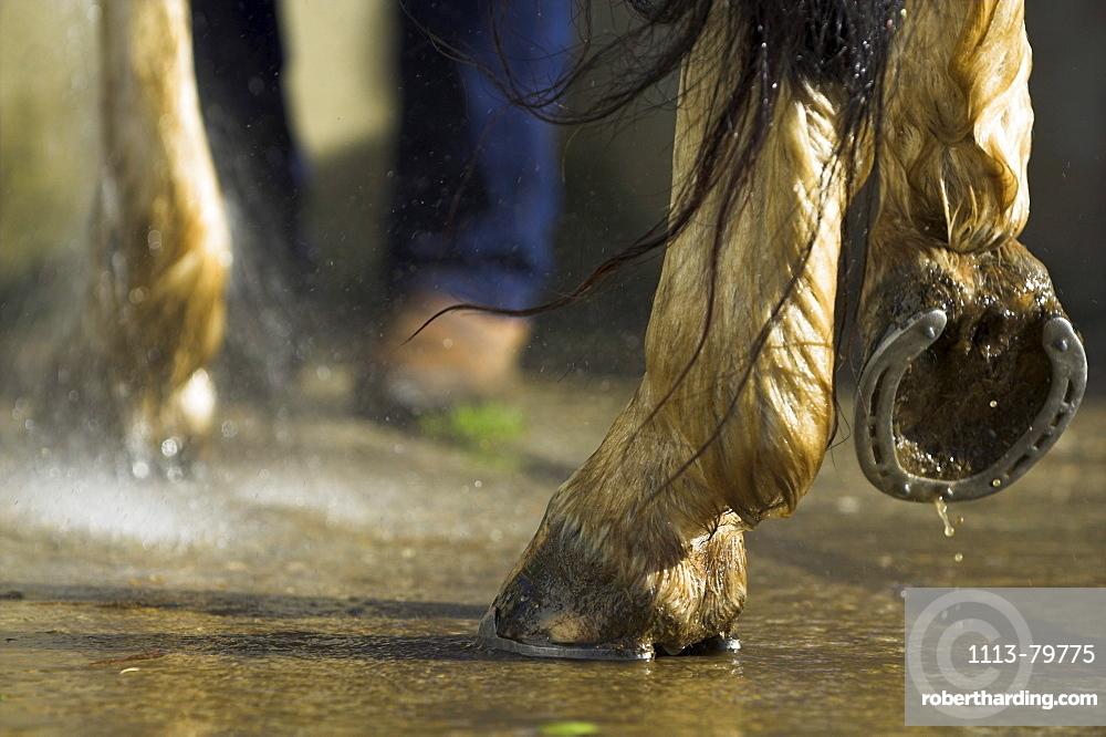 pferd beim waschen