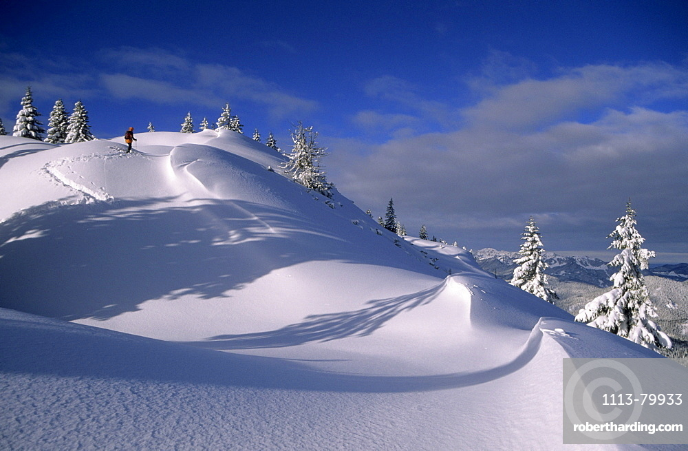Cornices and snow-covered fir trees with backcountry skiier at Schildenstein, Bavarian alps, Tegernsee, Upper Bavaria, Bavaria, Germany