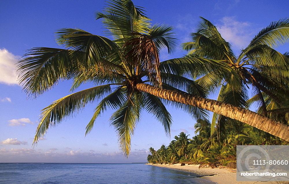Palm trees at deserted Trannies Beach on West Island, Australia