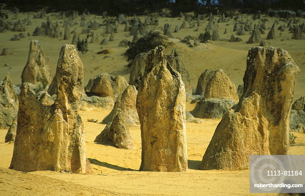 The limestone columns of the Pinnacles, Nambung National Park, Western Australia, Australia