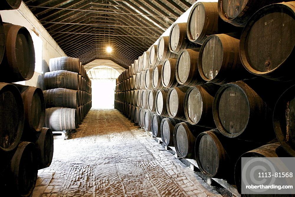 Barrels in a wine cellar, Bodegas Gongora, Villanueva del Ariscal, near Sevilla, Andalusia, Spain, Europe