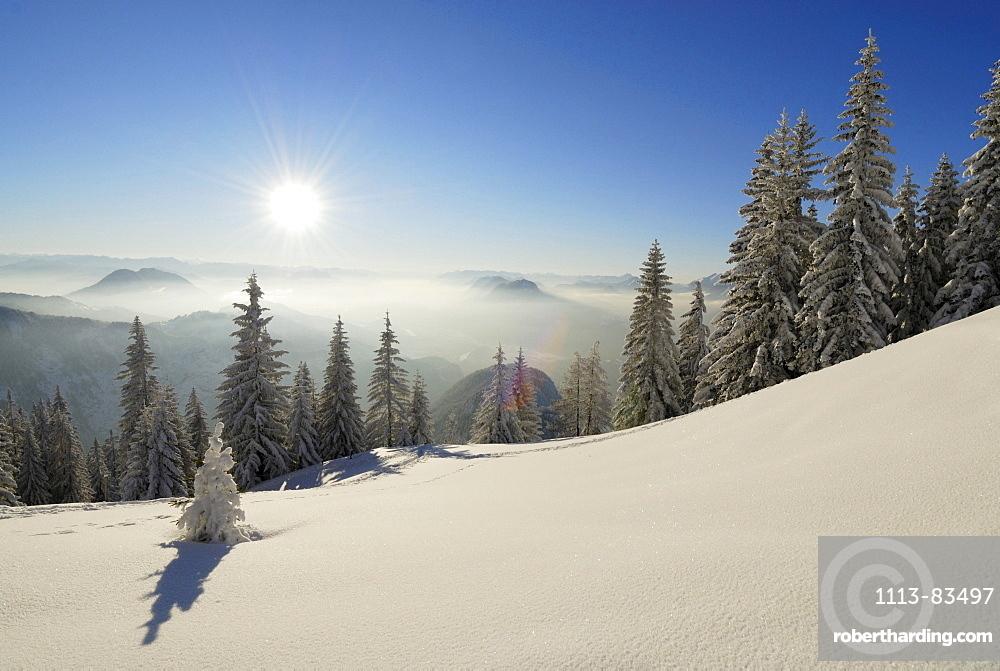 Snow-covered winter forest near hut Vorderkaiserfeldenhuette and fog bank in the valley of Inn, Poelven and Pendling above fog, Zahmer Kaiser, Kaiser range, Kufstein, Tyrol, Austria