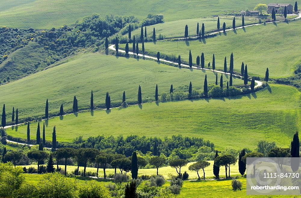 Row of cypress trees, near Pienza, Tuscany, Italy