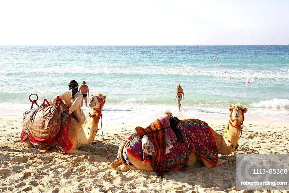 Camels on the beach, Dubai, United Arab Emirates, UAE