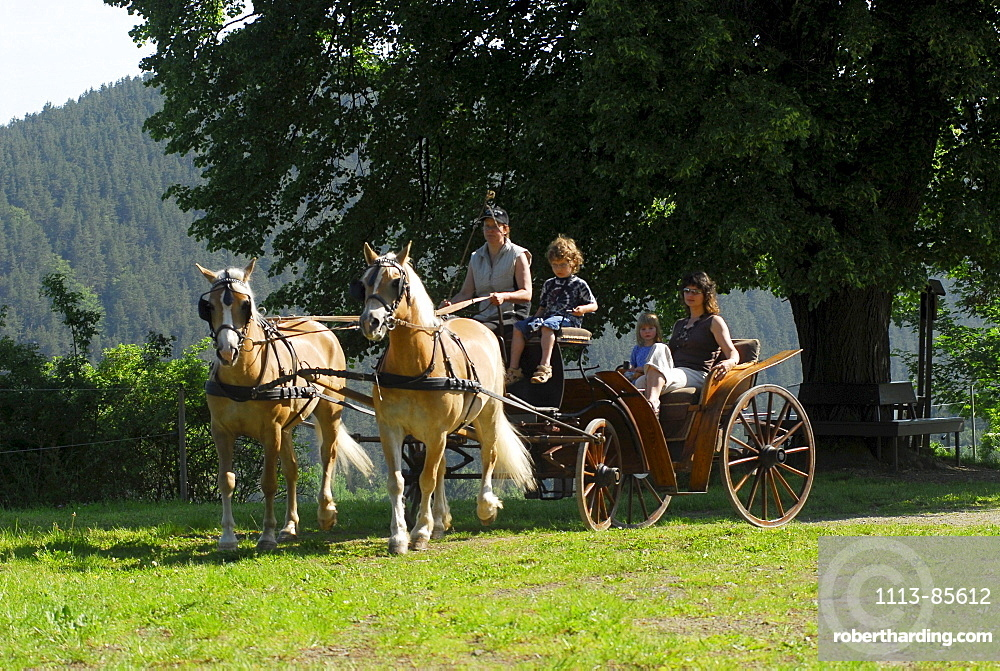 Horse carriage with Haflinger horses in Meura, Thuringia, Germany