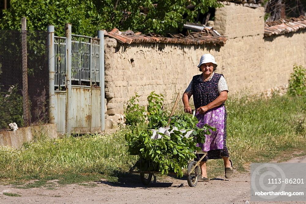 Peasant woman, Muselievo near Pleven, Bulgaria