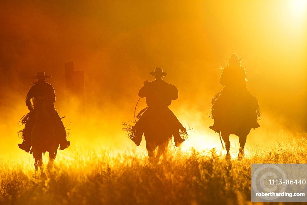 cowboys horseriding, Oregon, USA
