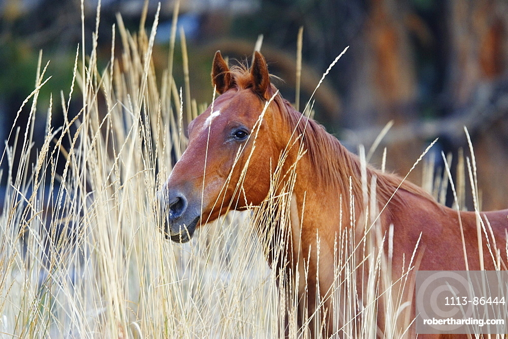 horse in wildwest Oregon, USA