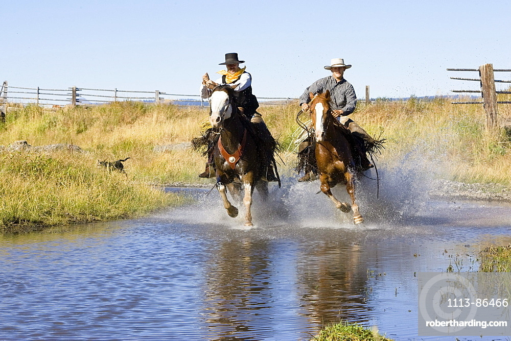 cowboys riding in water, Oregon, USA