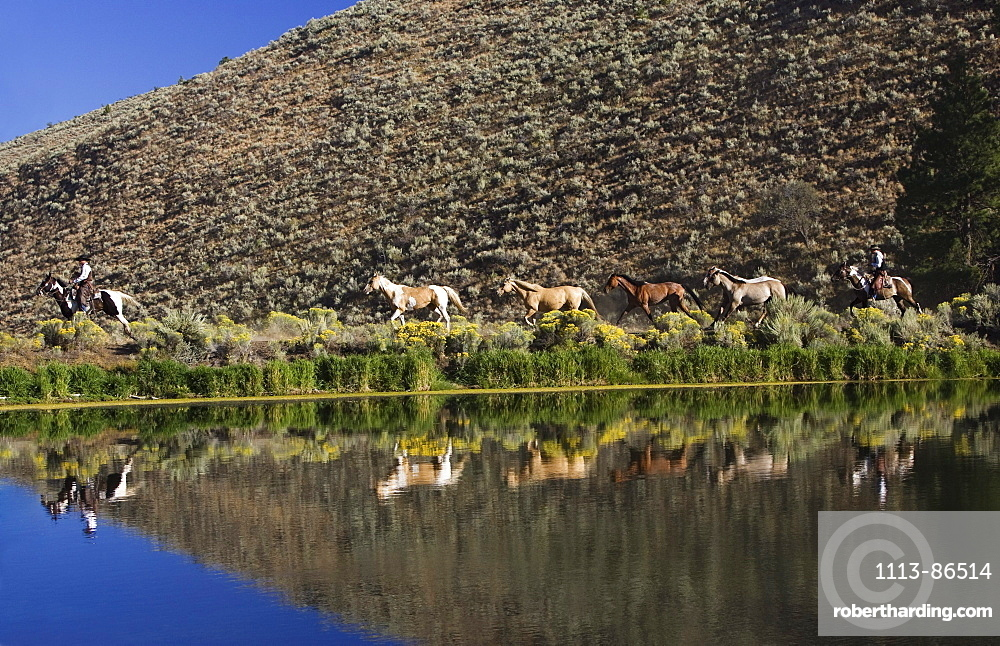 cowboys with horses, Oregon, USA
