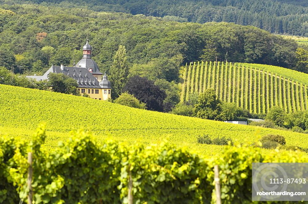 Vineyards and Castle Vollrads, Rheingau, Hesse, Germany