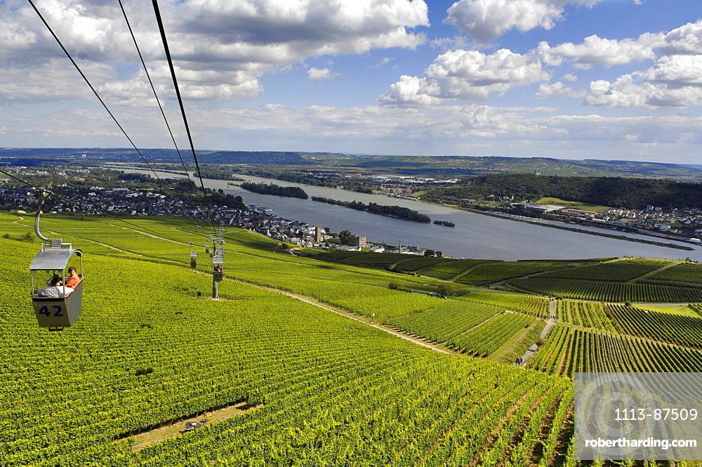 Cable car over vineyards, Ruedesheim am Rhein, Rheingau, Hesse, Germany