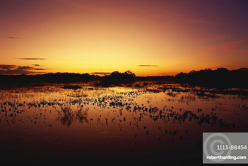 Flood water during the rainy season, Pantanal, Mato Grosso, Brasil, South America