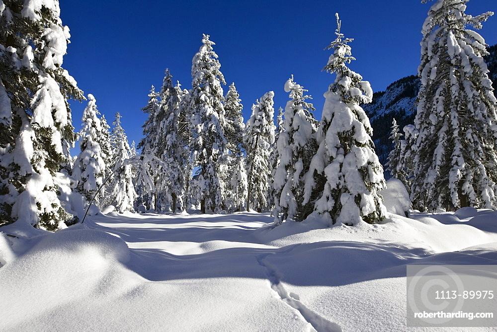 Winterscenery in the bavarian Alps, Upper Bavaria, Germany