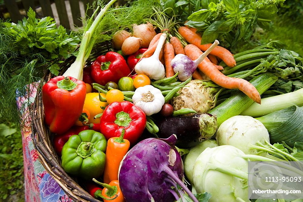 Fresh vegetables in a basket, harvest, Garden