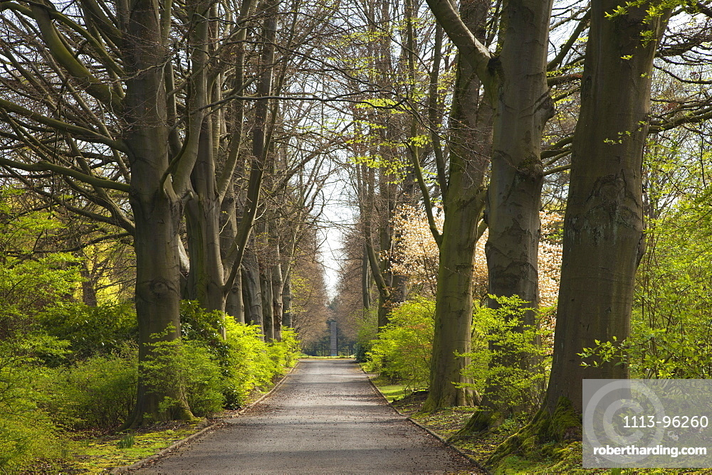 Allee of beech trees, Dortmund, North Rhine-Westphalia, Germany