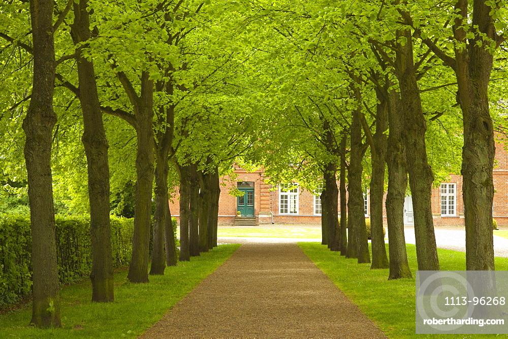 Alley of lime trees, Ploen castle gardens, Holsteinische Schweiz, Schleswig-Holstein, Germany