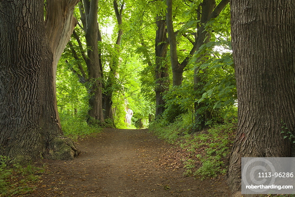 Alley of lime trees, Leinebergland, Lower Saxony, Germany