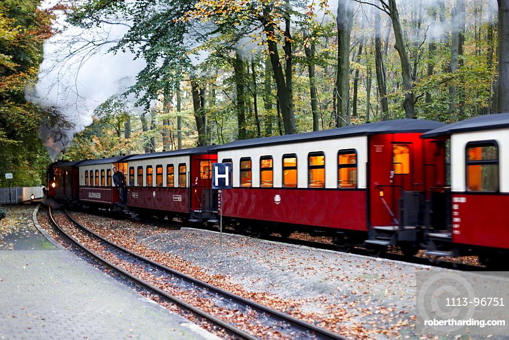 Molli railway between Bad Doberan and Heiligendamm, Mecklenburg-Western Pomerania, Germany