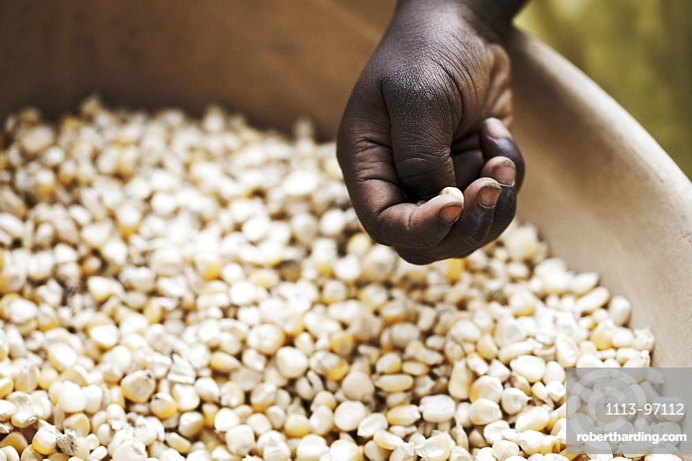 Hand above a bowl with grains of corn, Magadala, Mali