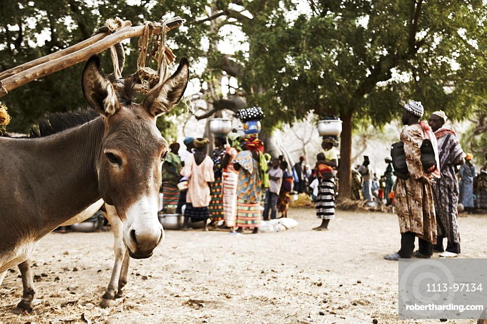 Market, donkey in foreground, Dogon land, Mopti region, Mali