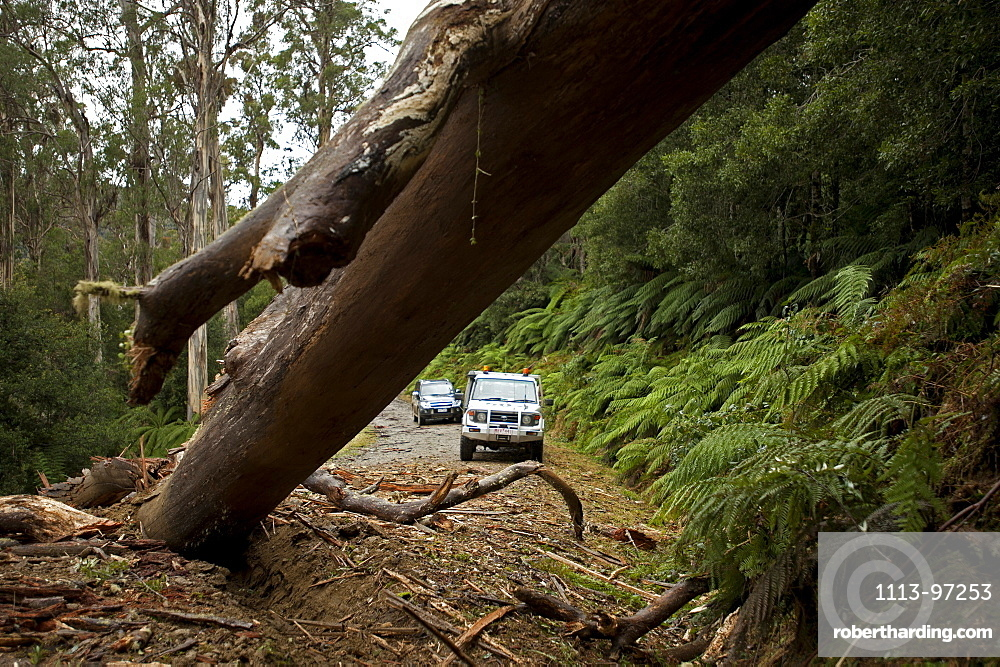 Road to Errinndra National Park, East Gippsland, Victoria, Australia