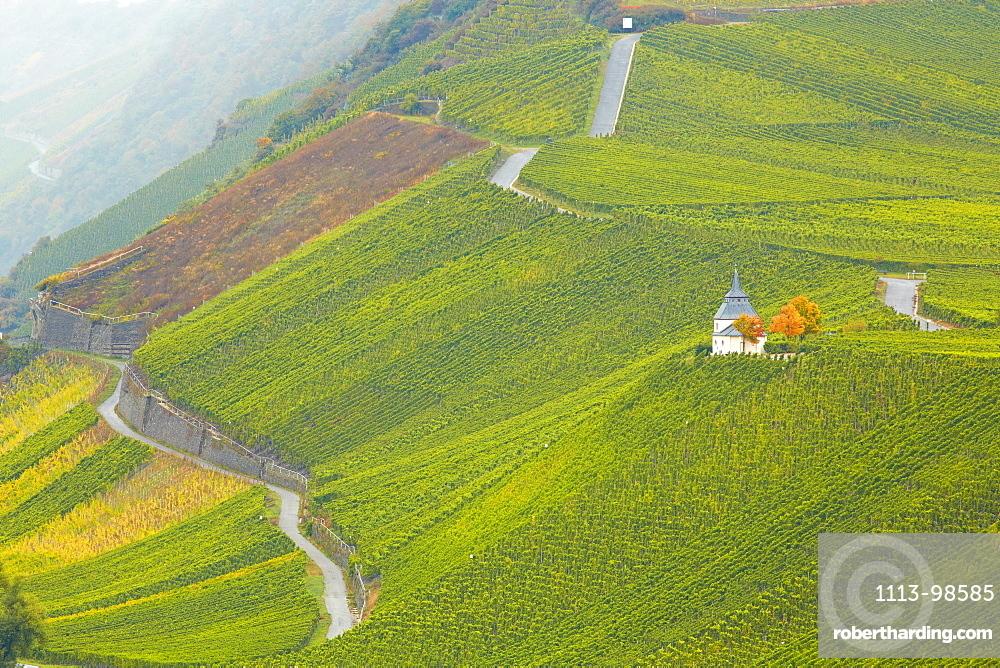 Vineyard at Trittenheim, Mosel, Rhineland-Palatinate, Germany, Europe