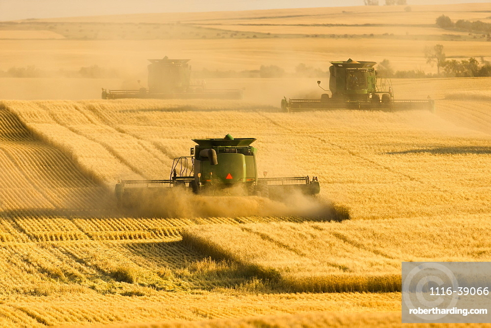 Paplow Harvesting Company custom combines a wheat field, near Ray; North Dakota, United States of America