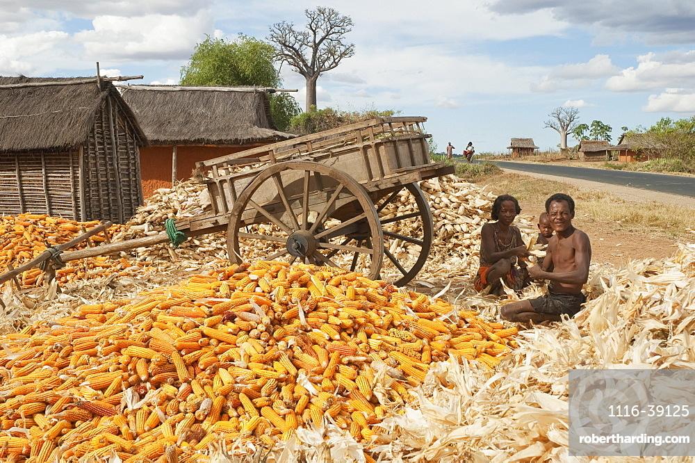 Family Separating Husks From Corn In Mahaboboka, Toliara Province, Madagascar