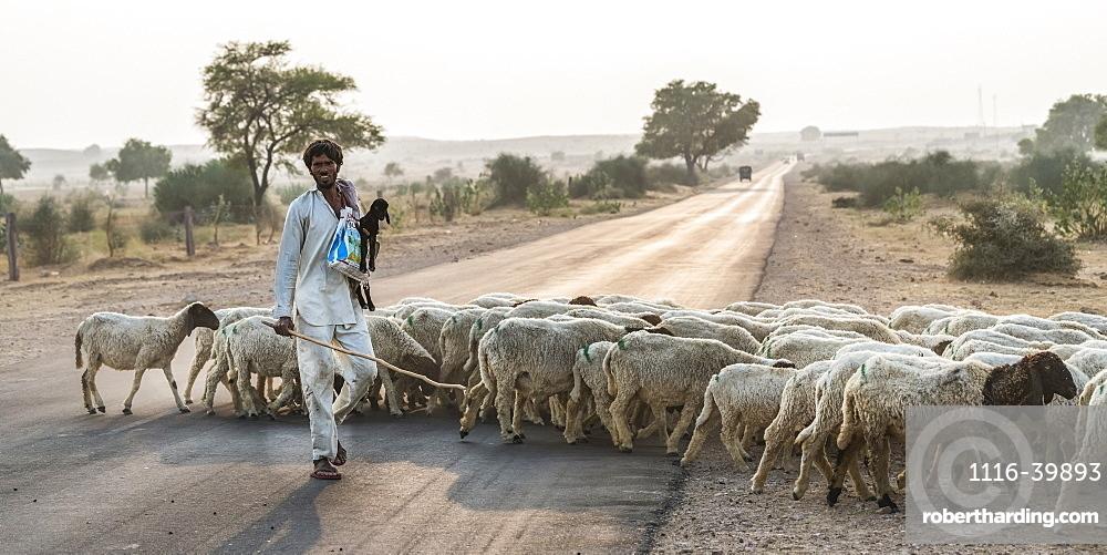 A man herding a flock of sheep across a road, Damodara, Rajasthan, India