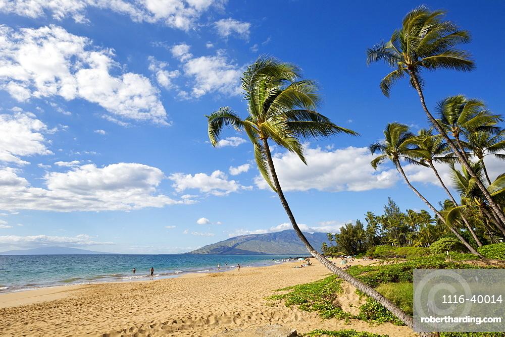 Palm trees lining Kamaole Beach, Kihei, Maui, Hawaii, United States of America