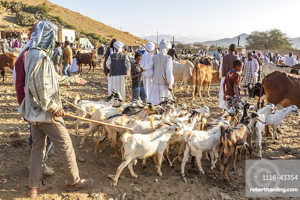 Goat herders with their goats at the Monday livestock market, Keren, Anseba Region, Eritrea