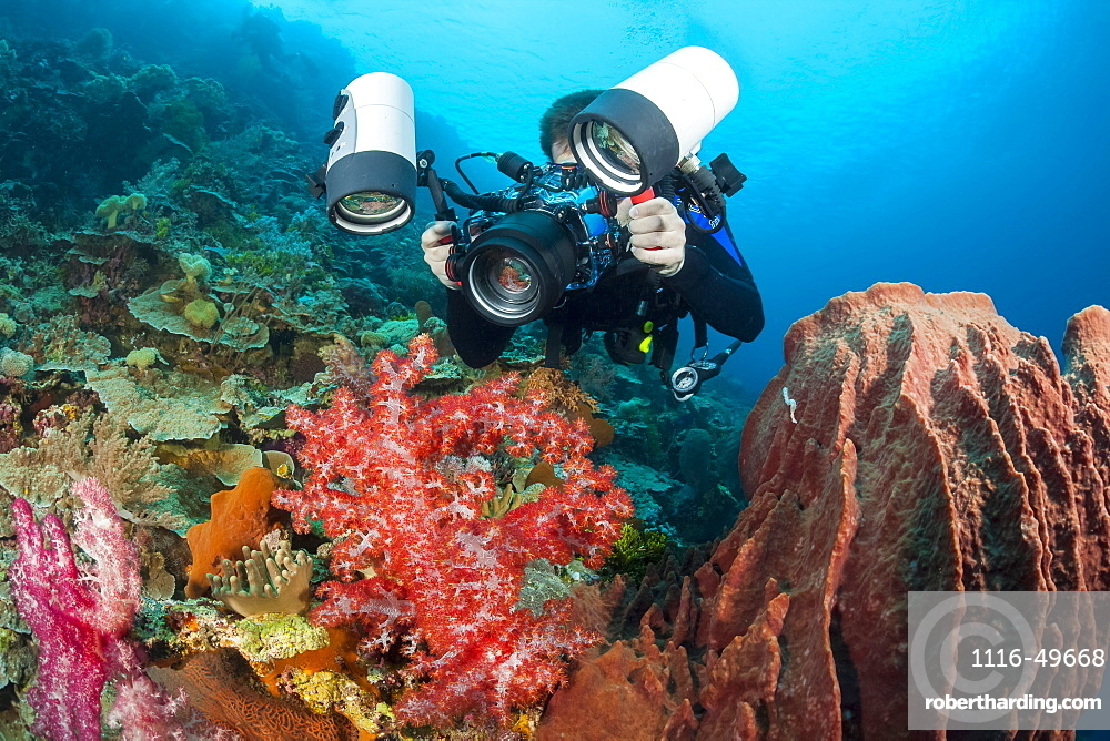 A photographer lines up with a SLR in a housing with a macro lens to shoot at tiny crab perched on soft coral, Indonesia