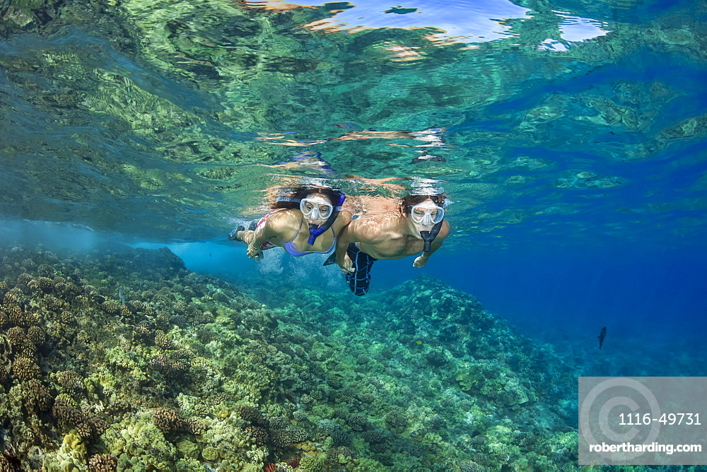 A young couple free diving in clear water over a Hawaiian reef, Hawaii, United States of America