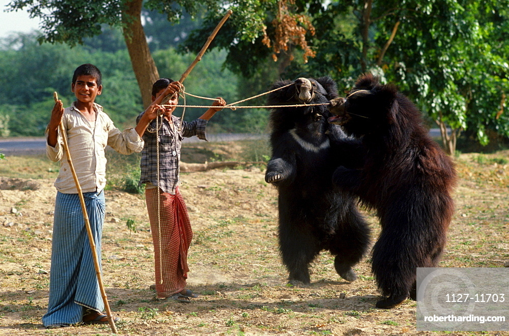 Boys with dancing Sloth Bears, Jaipur, Rajasthan, India