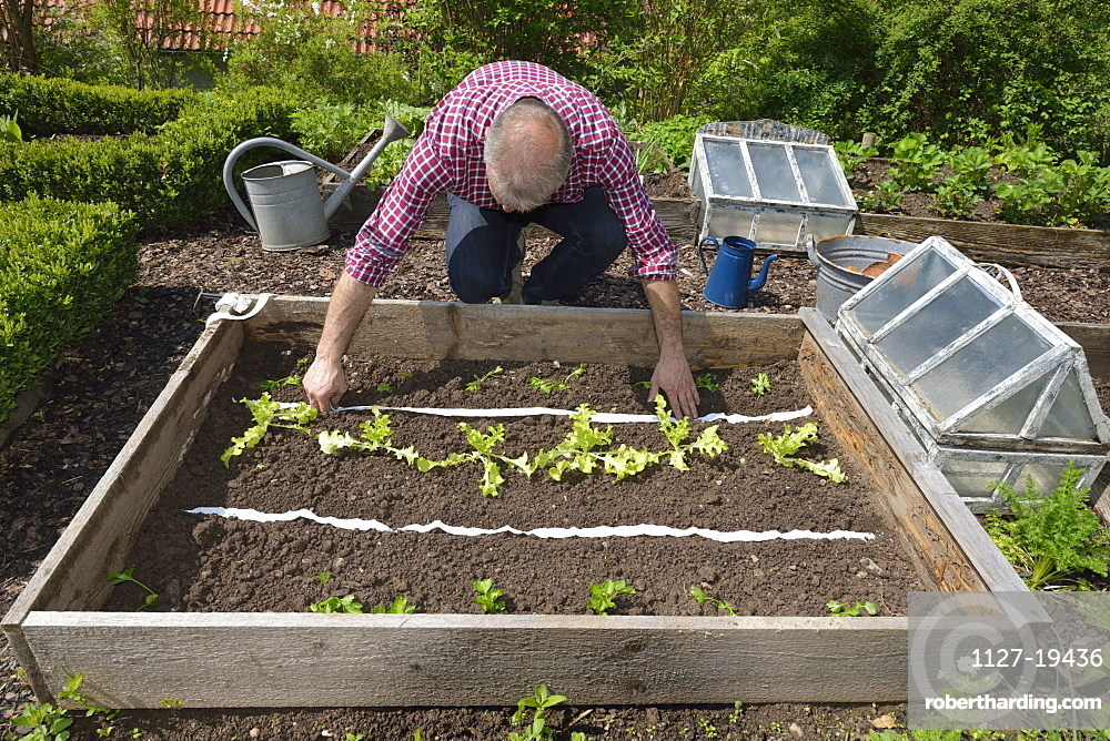 Planting vegetable bed with seed tape