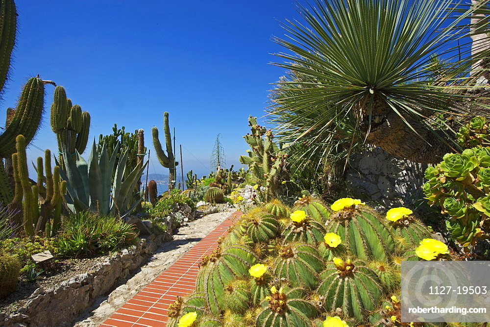 Jardin Exotique In Eze Cote Stock Photo