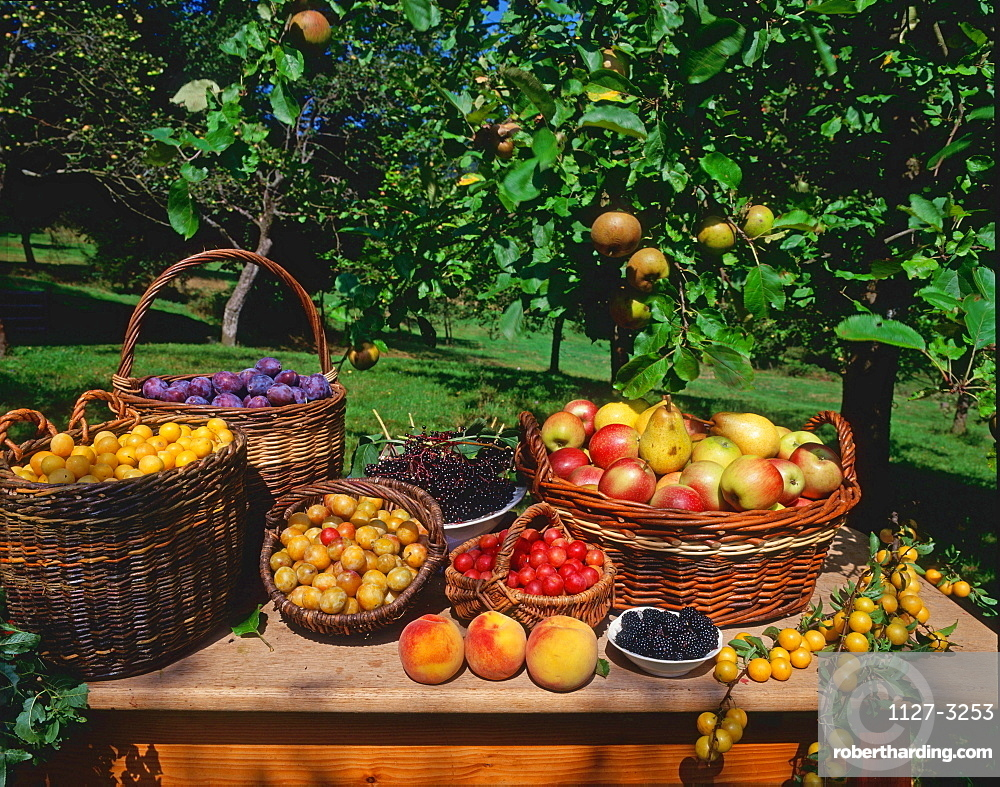 Baskets with fruits, Plums, Yellow Plums, Apples, Pears, Peaches and Elder