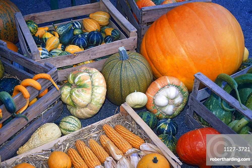 Different kinds of Pumpkins at farmshop, Ittendorf, Lake Constance, Baden-Wurttemberg, Germany