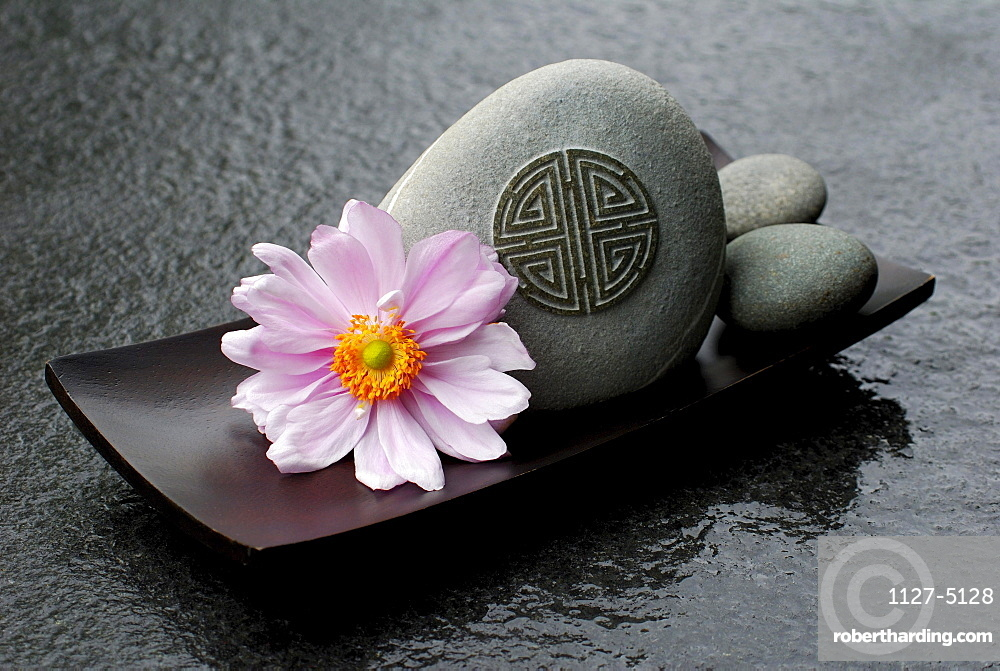 Japanese Anemone, blossom and stones in bowl / (Anemone japonica)