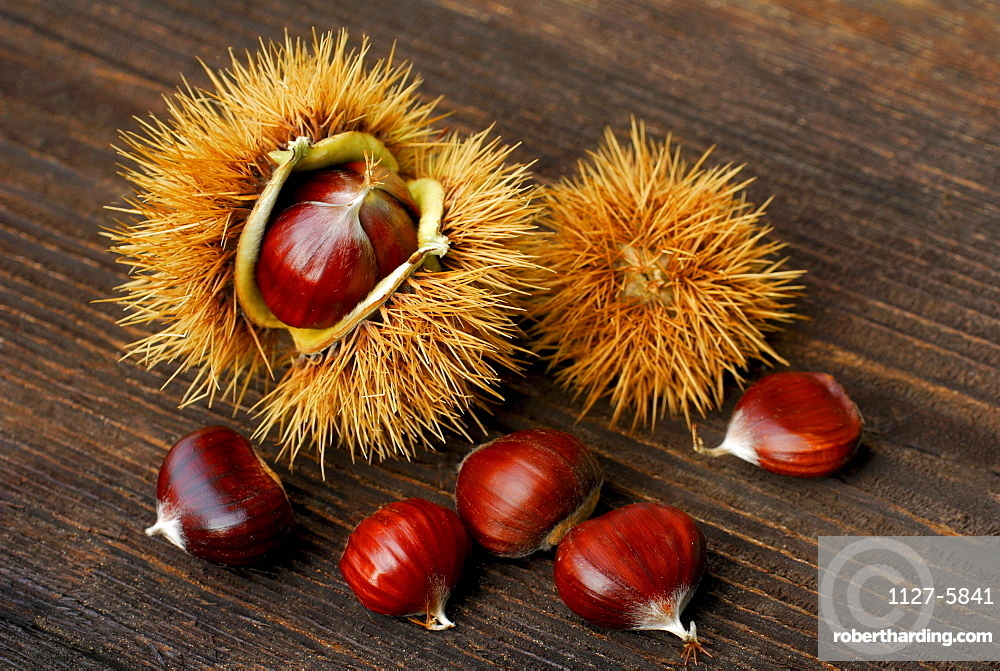 Sweet Chestnuts / (Castanea sativa)