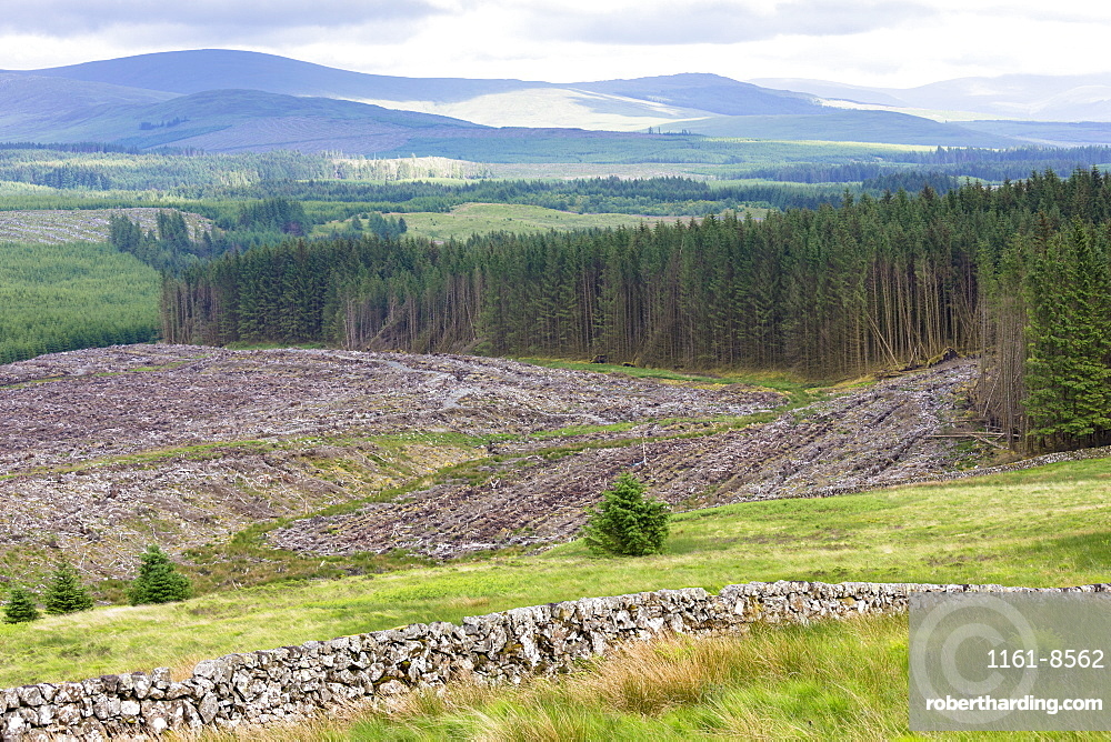 Razed forest of pine trees stripped for timber at Forestry Commission coniferous plantation in Galloway Forest Park, Carrick, Argyllshire, Western Scotland, United Kingdom, Europe