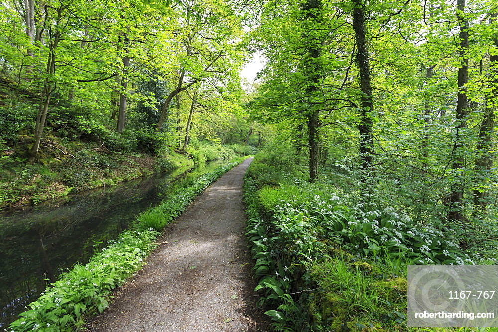 Historic Cromford Canal and tow path in spring, Derwent Valley Mills, UNESCO World Heritage Site, Derbyshire, England, United Kingdom, Europe