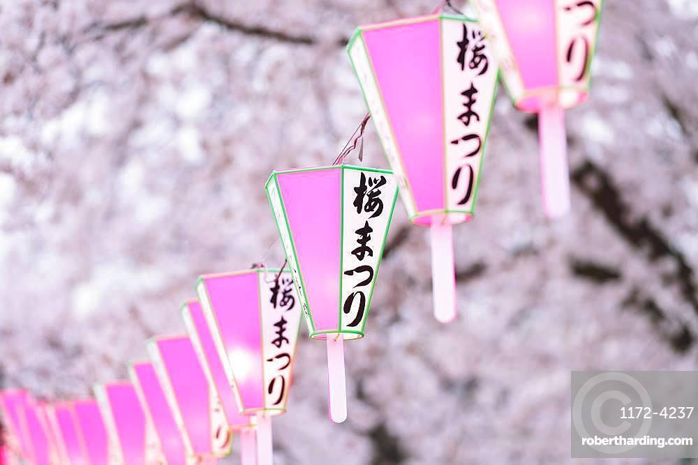 Cherry blossoms festival at Sumida Park, Tokyo, Japan
