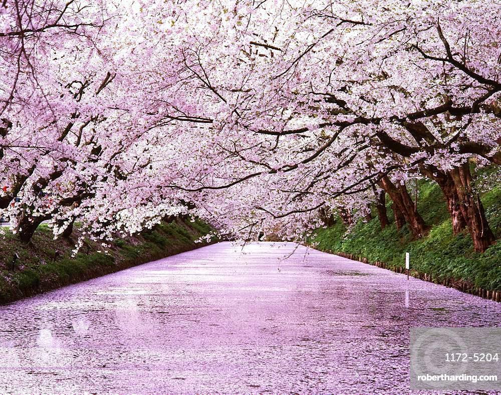 Hirosaki Park, Aomori Prefecture